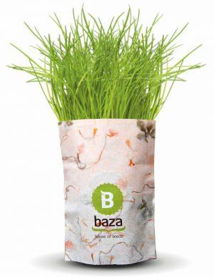Baza-Bio Promogarten im PRESIT Shop-7 Sorten zur Auswahl:Minze,Schnittlauch,Petersilie,Dill,Koriander,Oregano -Special: Tannenbaum