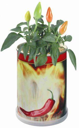Blumendose Hot als Werbeartikel mit Logo im PRESIT Online-Shop bedrucken lassen