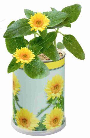 Blumendose Sonne  als Werbeartikel mit Logo im PRESIT Online-Shop bedrucken lassen