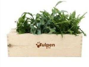 Pflanzenbox Medium WER GmbH
